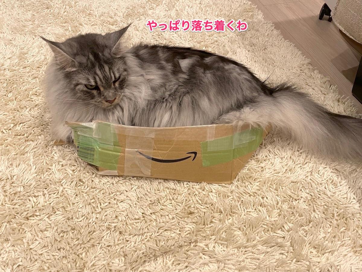 f:id:chikojirou:20210731222212j:plain