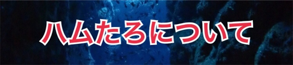 f:id:chikugiyuki:20190609083332j:image