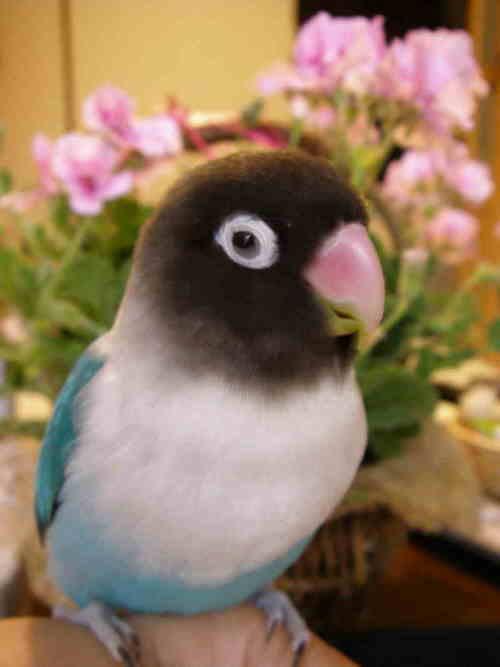 f:id:chikura-animal:20181107153054j:plain