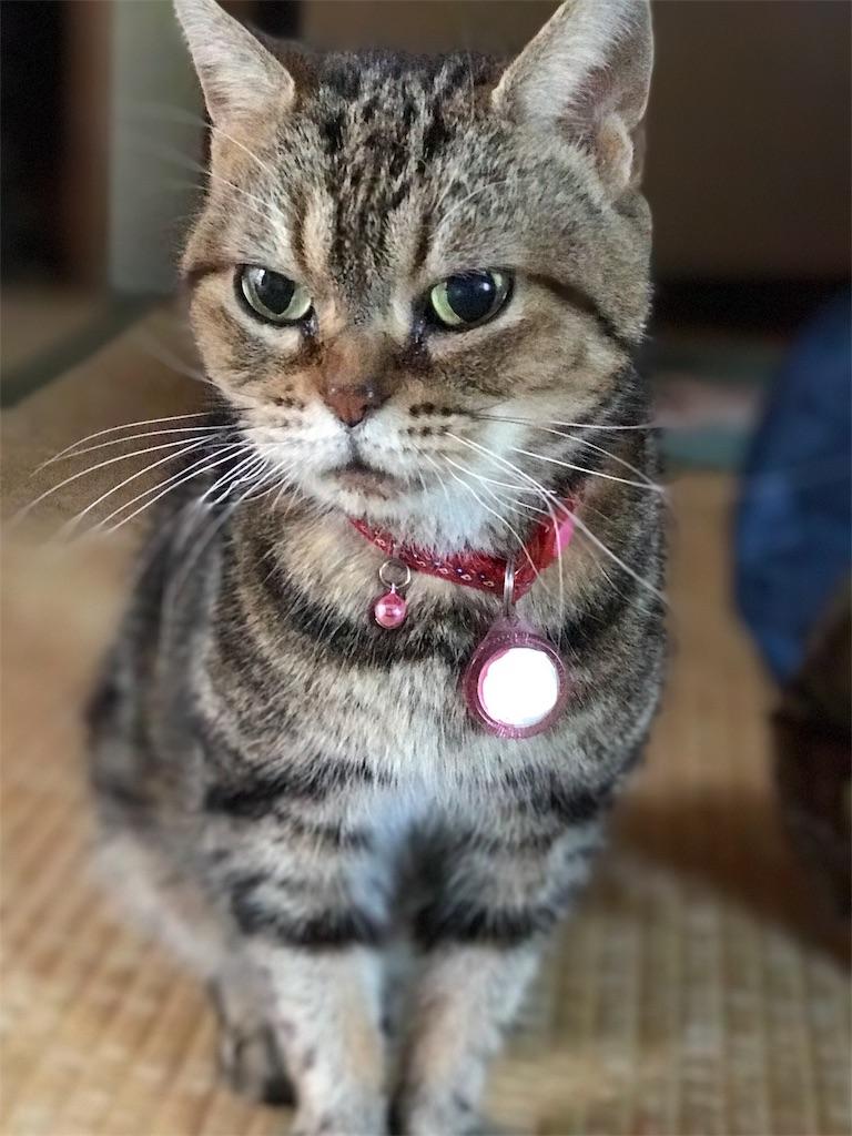 f:id:chikura-animal:20181119163940j:image