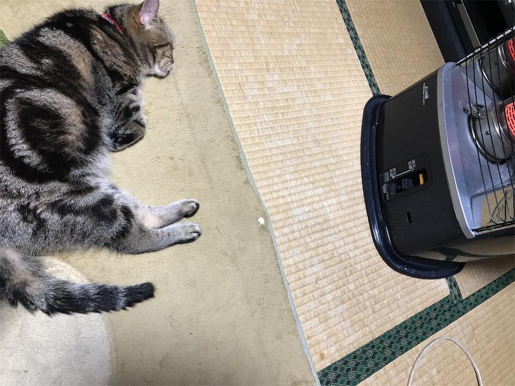 f:id:chikura-animal:20181119163958j:image