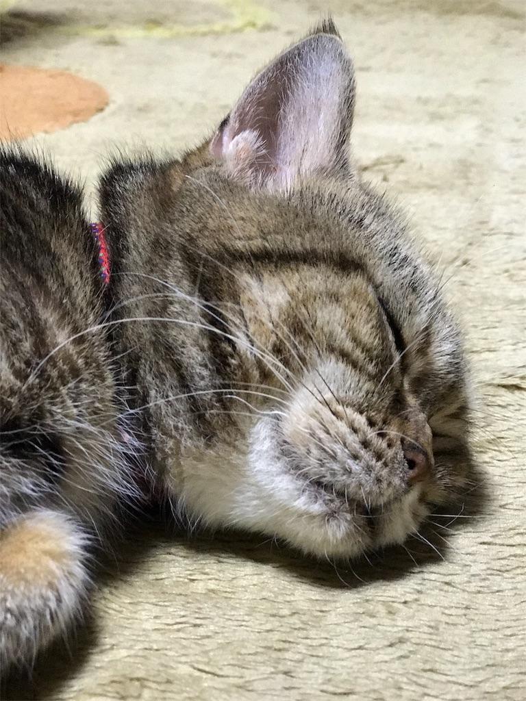 f:id:chikura-animal:20181119164022j:image