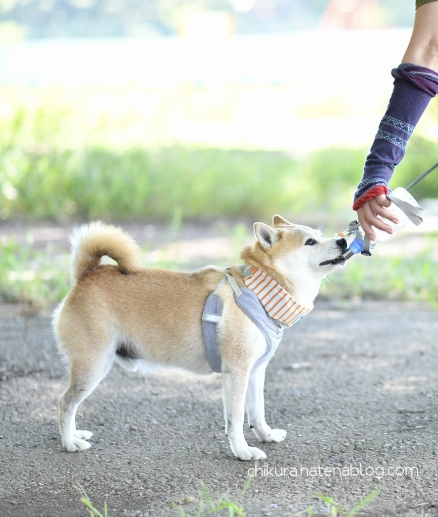 f:id:chikura-animal:20181130165246j:plain