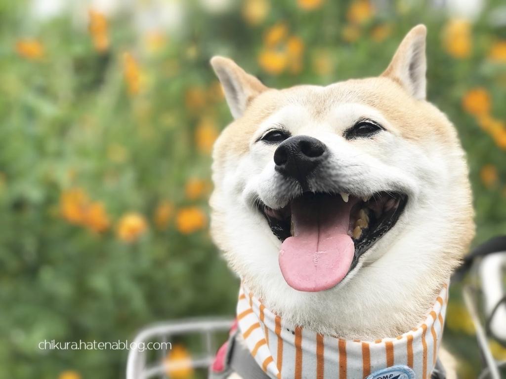 f:id:chikura-animal:20181130165303j:plain