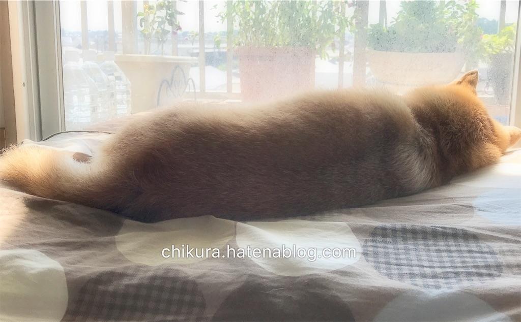 f:id:chikura-animal:20181130193236j:image