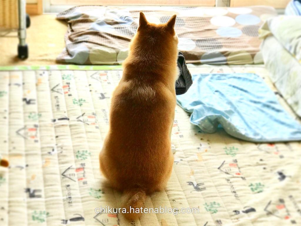 f:id:chikura-animal:20181130193349j:image