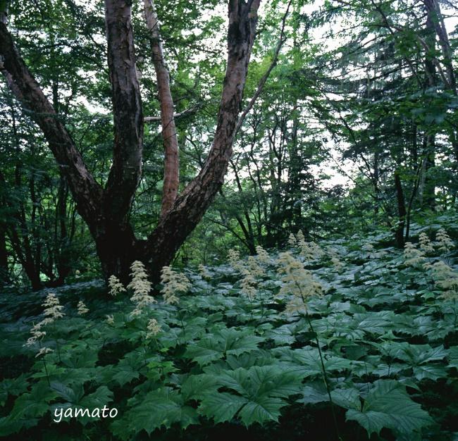 f:id:chikusai2:20200619122745j:plain