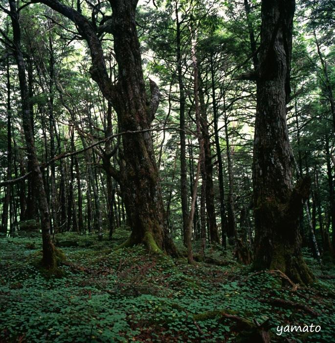 f:id:chikusai2:20200619123057j:plain
