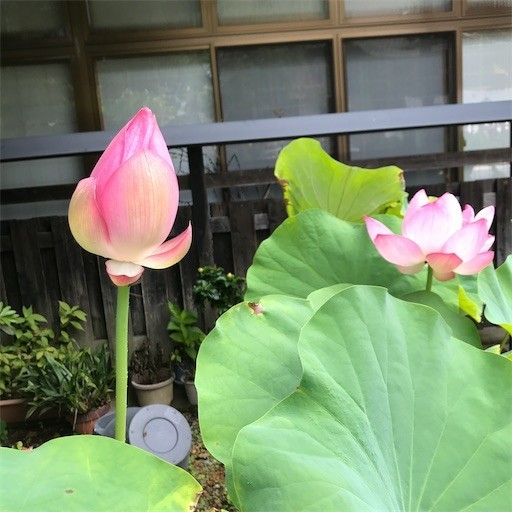 f:id:chikuwansai:20200813084833j:image