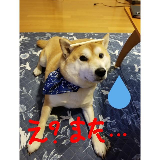f:id:chikuwanwan1106:20190405205808j:image