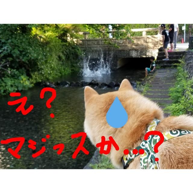 f:id:chikuwanwan1106:20190503235020j:image