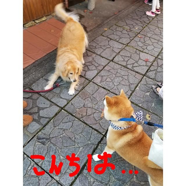 f:id:chikuwanwan1106:20191121185437j:image