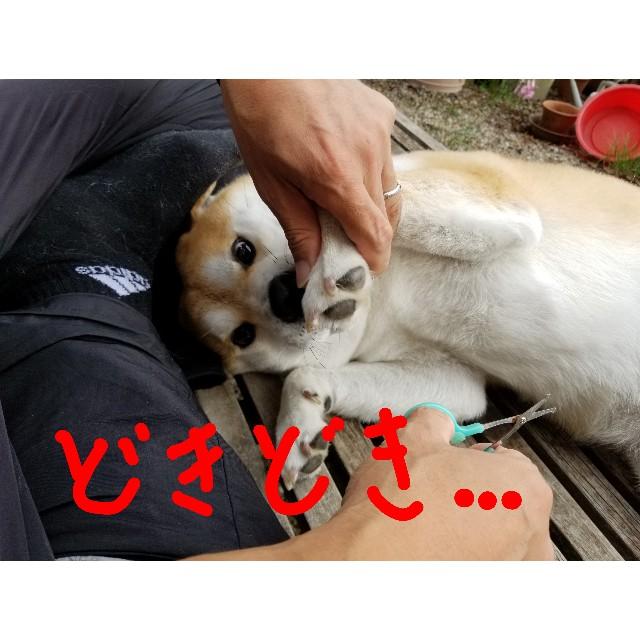 f:id:chikuwanwan1106:20191127211527j:image