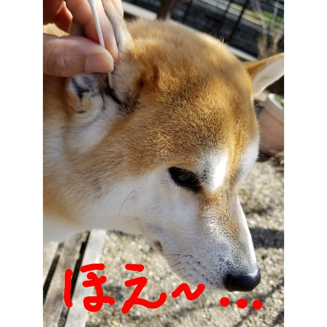 f:id:chikuwanwan1106:20200325004958j:image