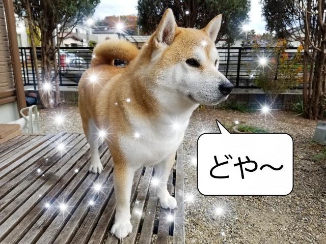 f:id:chikuwanwan1106:20210113214509j:image