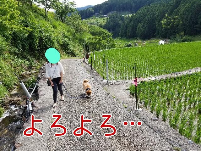 f:id:chikuwanwan1106:20210701211746j:image