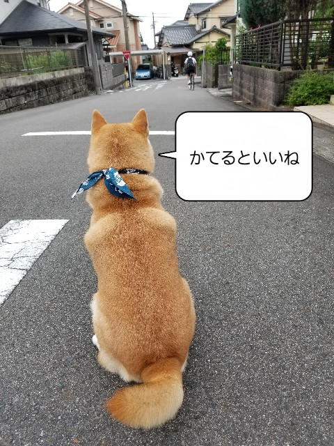f:id:chikuwanwan1106:20210713205233j:image