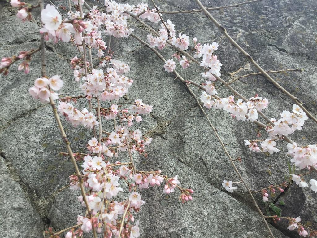 f:id:chikyusanpo:20180318182002j:image