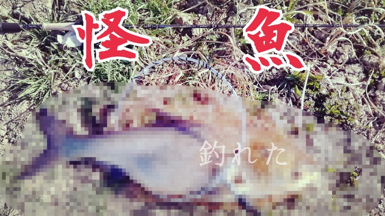 f:id:childfoot2000:20200224012333j:image