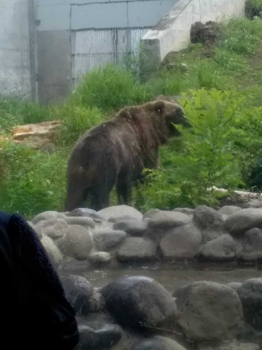 エゾヒグマ。またしても後ろ向きで、耳が見えるから熊だとわかるうすぼんやり。