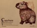 [カピバラ][鬼天竺鼠][ペン画][壁紙1024×768]