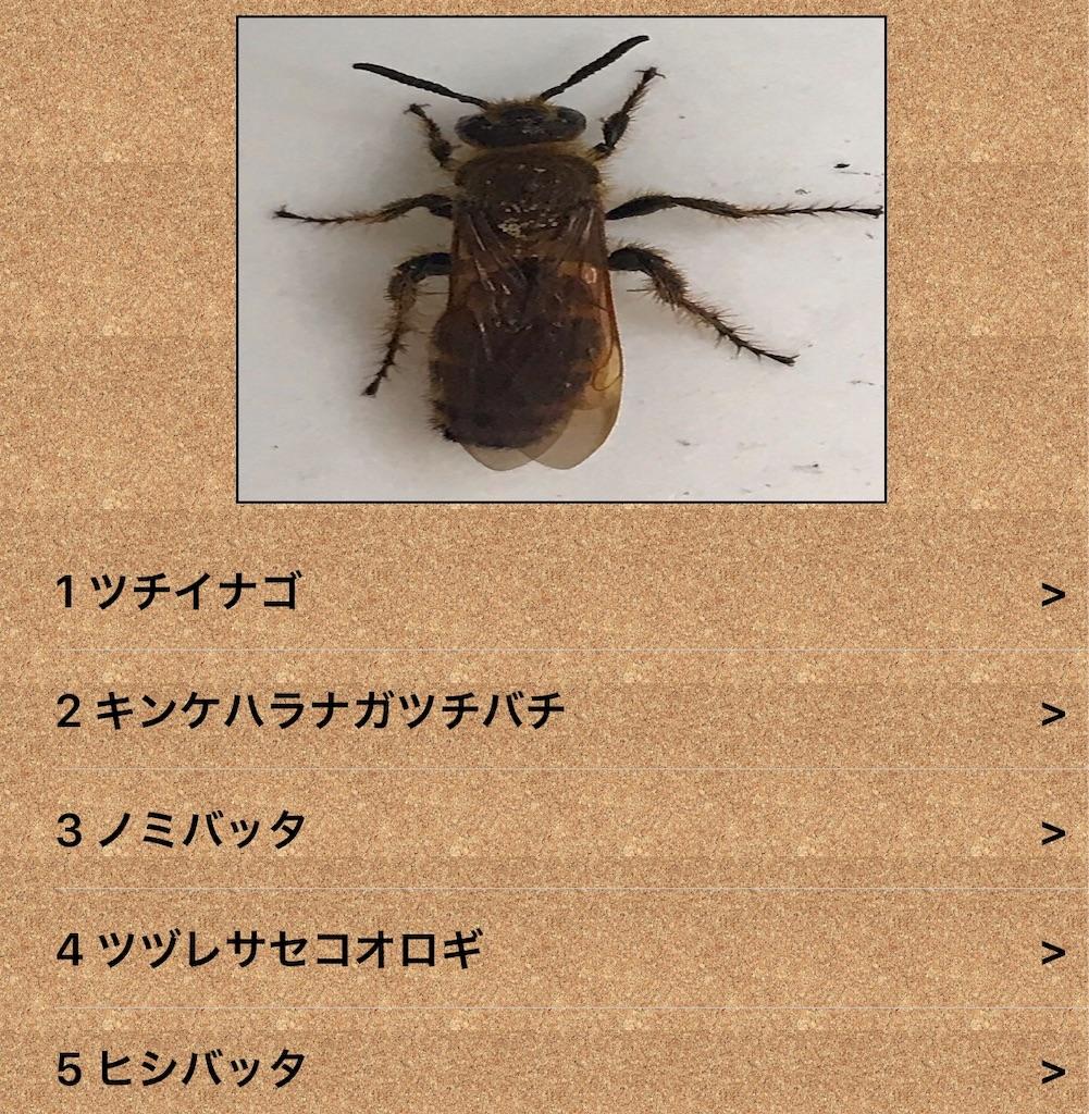 f:id:chinasuki:20190823163225j:image