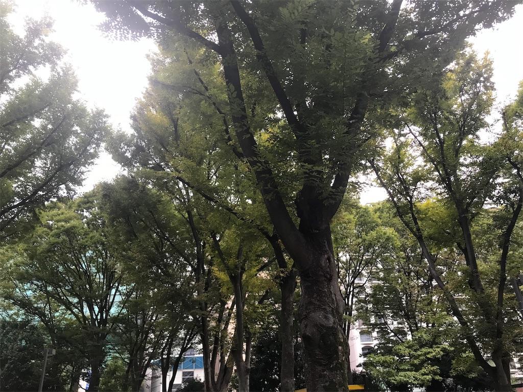 f:id:chinasuki:20191017075952j:image