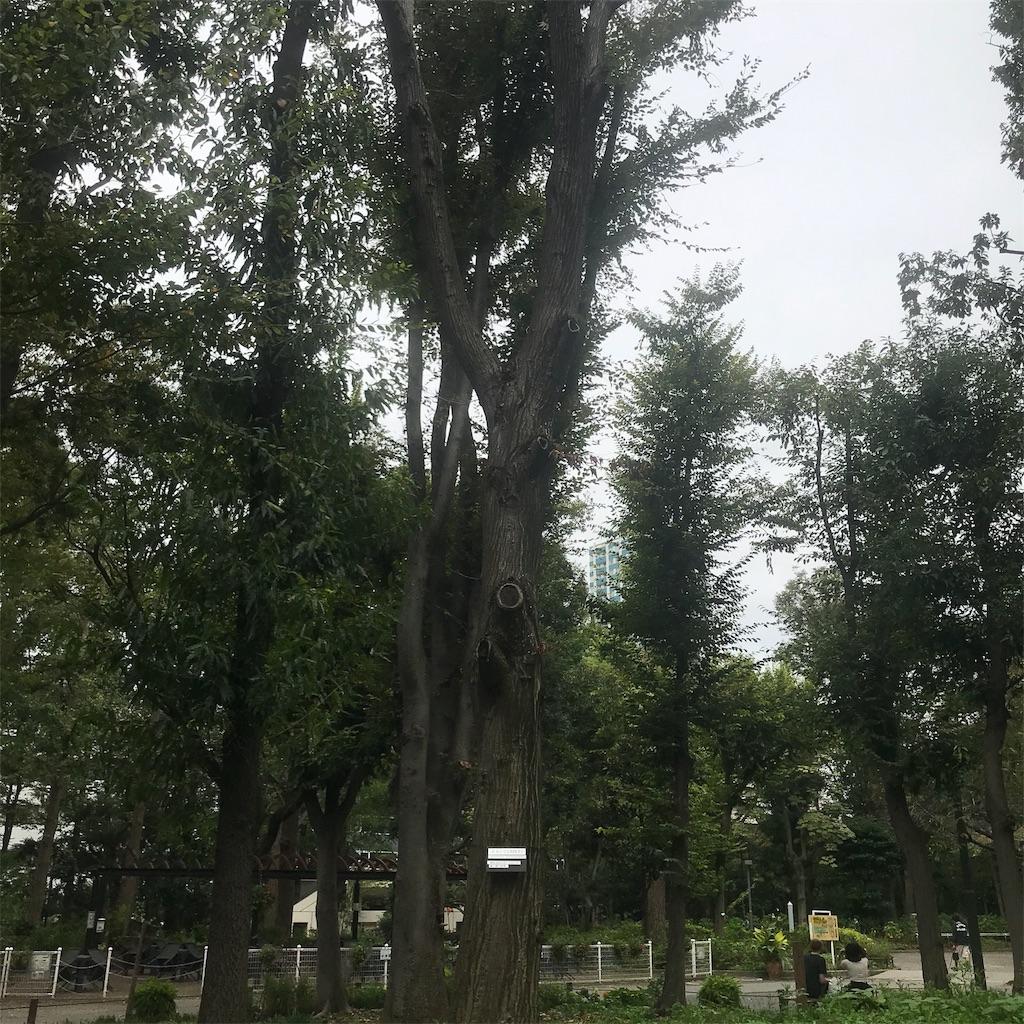 f:id:chinasuki:20191021093806j:image