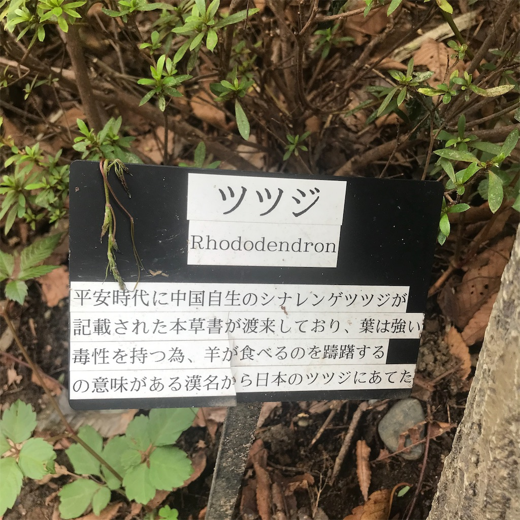f:id:chinasuki:20191021093920j:image
