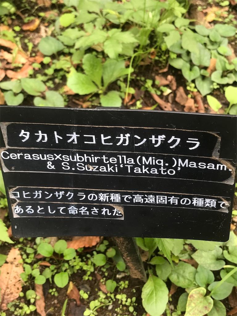 f:id:chinasuki:20191021093955j:image