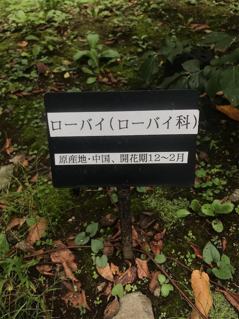 f:id:chinasuki:20191021094130j:image