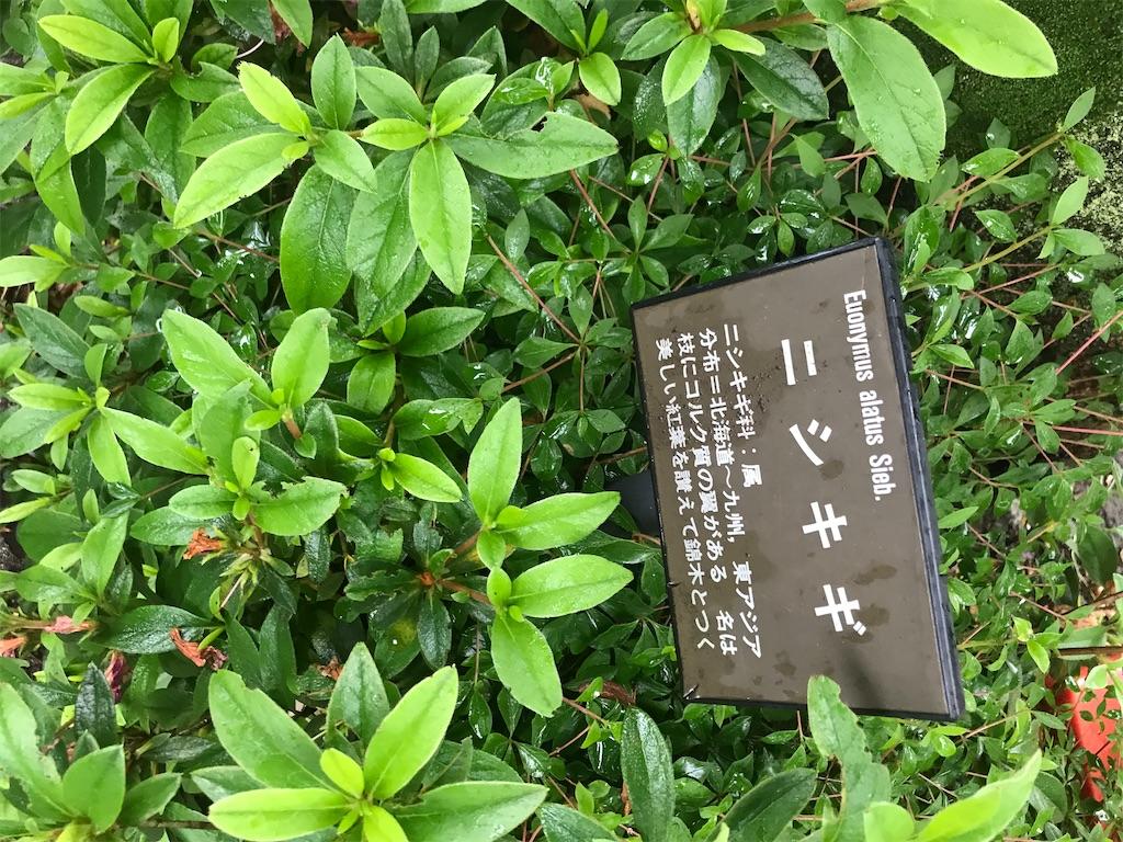 f:id:chinasuki:20200520170410j:image