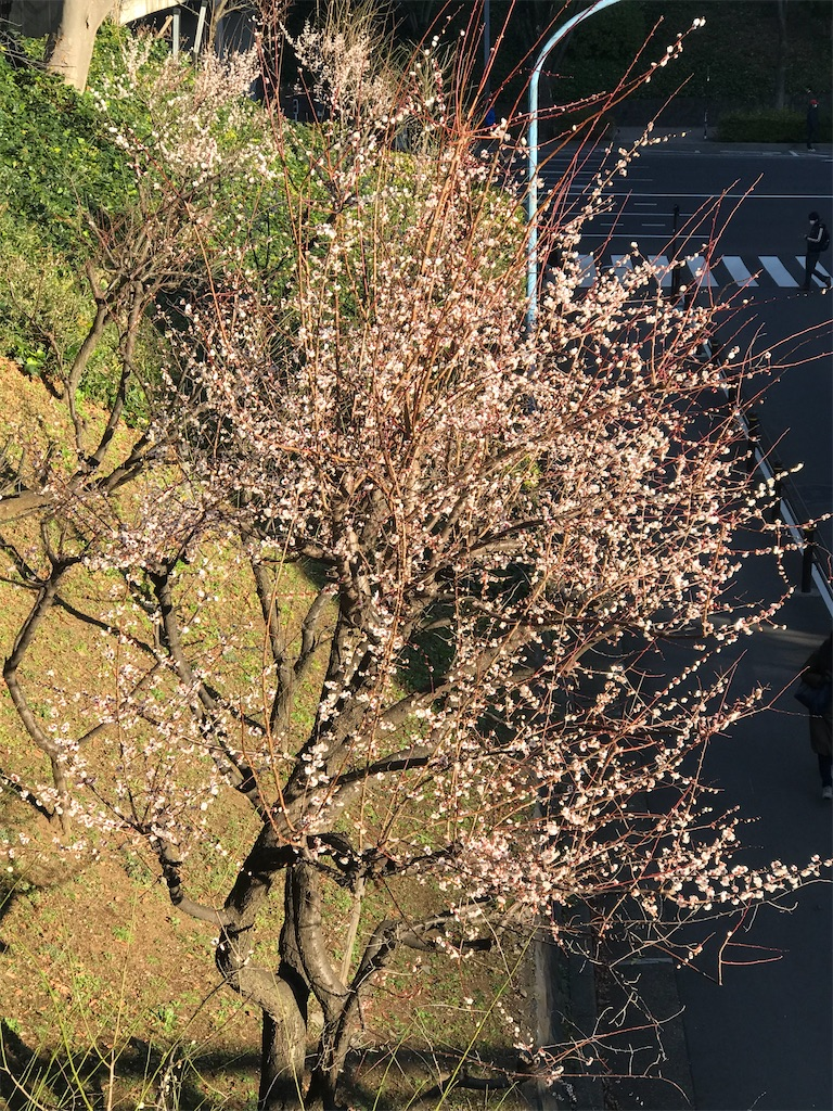 f:id:chinasuki:20200526153846j:image