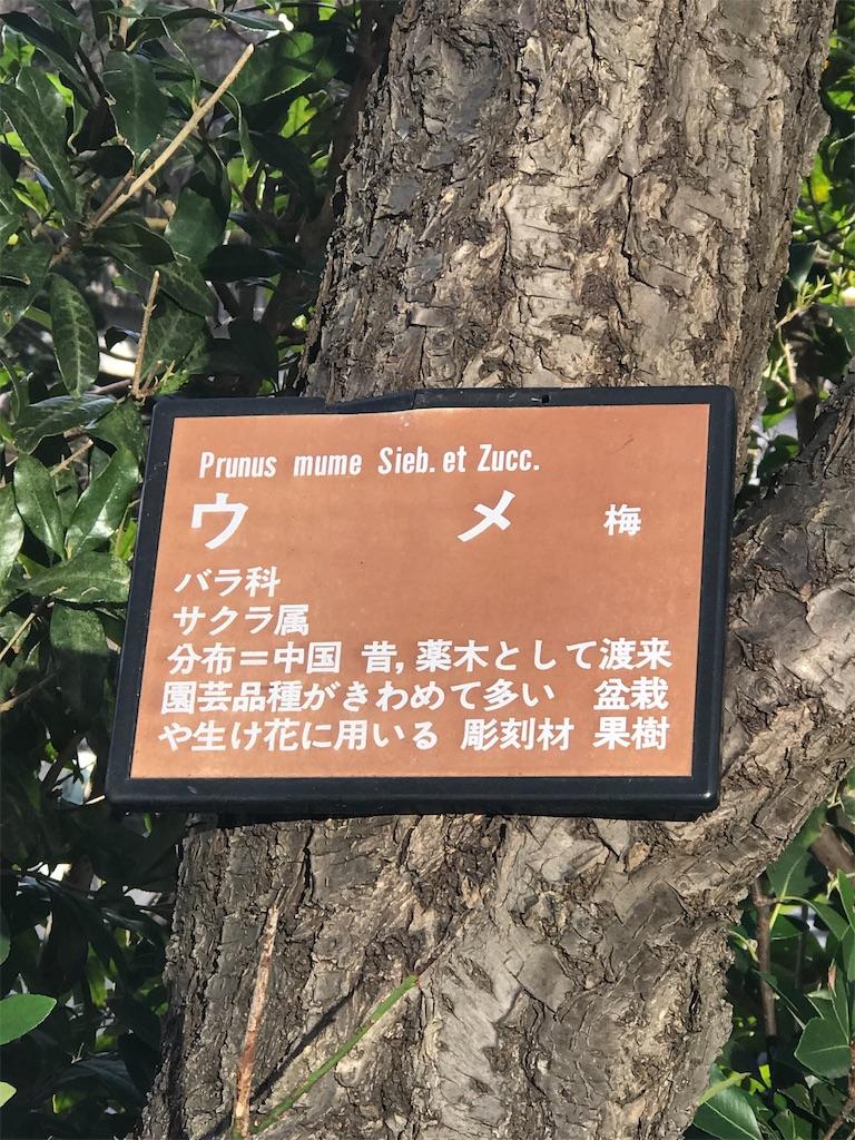 f:id:chinasuki:20200526154411j:image