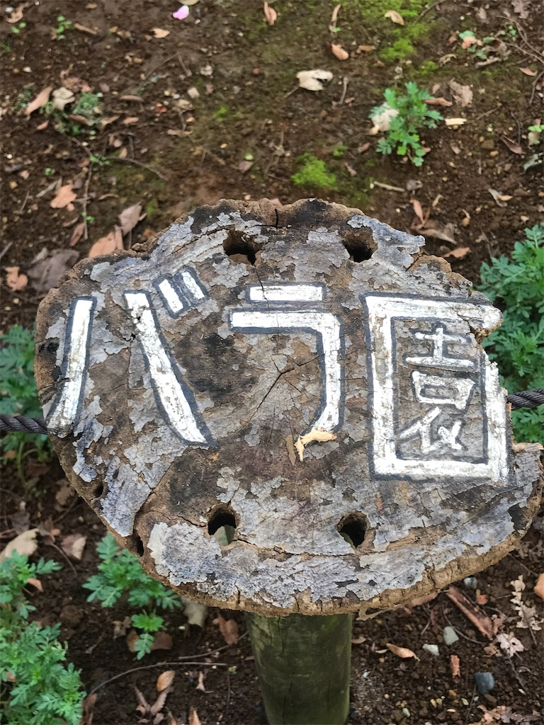 f:id:chinasuki:20210917134617j:image