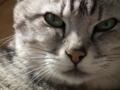 [がぼ][猫][ねこ]