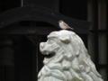 [鳥]狛犬とスズメ