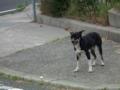 淡路島の大観音前の迷い犬、放置された可能性も?