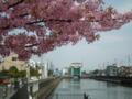 [花][植物]六ツ木水門近く