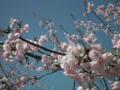 [花][植物]水元公園の圃場