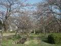 [花][植物]水元公園・グリーンプラザ近く、ソメイヨシノ
