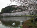 [花][植物]袖ケ浦公園