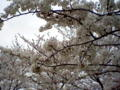[花][植物]みさと公園