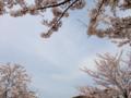 [花][植物]曳舟川親水公園(お花茶屋)