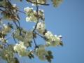 [花][植物]水元公園