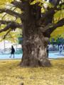 東京大学(工学部側)