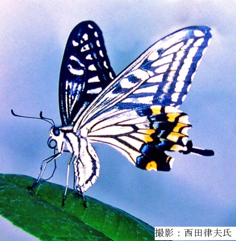 f:id:chinoki1:20030902224309j:image:w360
