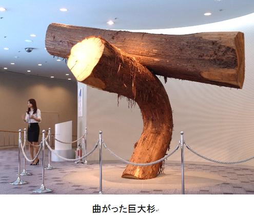 f:id:chinoki1:20140707230910j:image