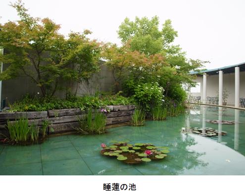 f:id:chinoki1:20140707232711j:image
