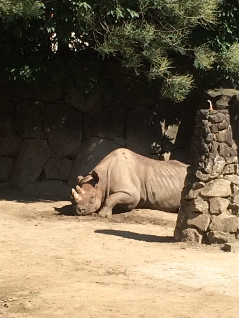 金沢動物園 サイ